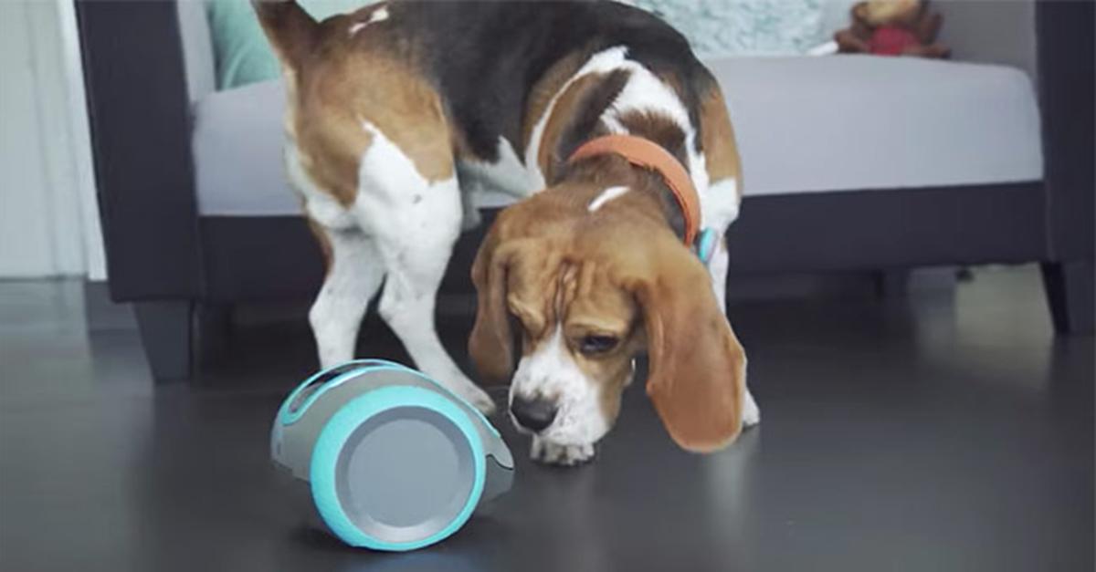 【CES 2018亮點產品】可追蹤移動記錄的阿拉丁智慧神燈,會講話的馬桶,陪狗狗玩的機器人...